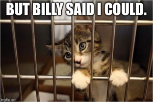 Remember during the first reading of this bill when Billy said the government shouldn't collect small fines? Well, poor kitty cat took him literally.