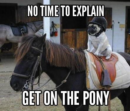 dog-pony