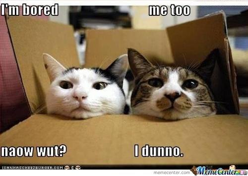bored-cats