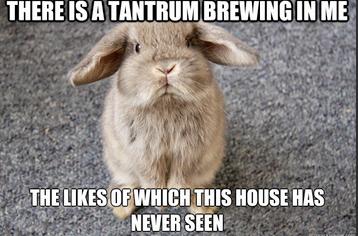 Tantrum Brewing