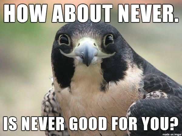 How-About-Never-Is-Never-Good-For-You-Funny-Bird-Meme-Picture