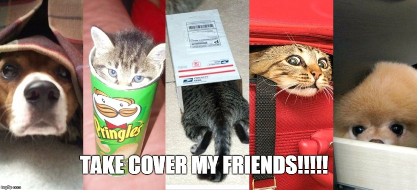 Cute-Pet-Animals-Hiding-Meme